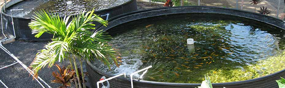 ozone-in-aquaculture-application-faraday-ozone